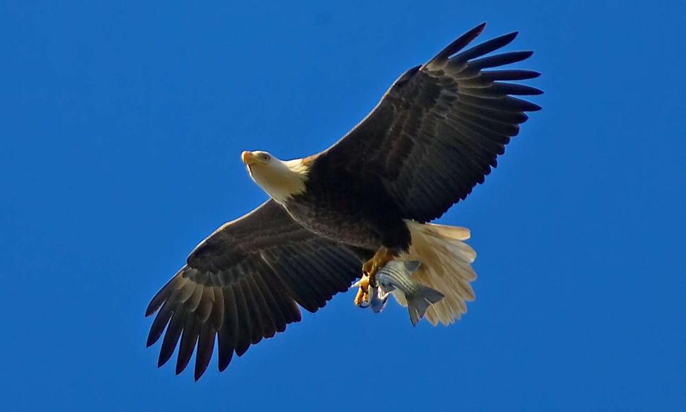 eagle-782544.jpg